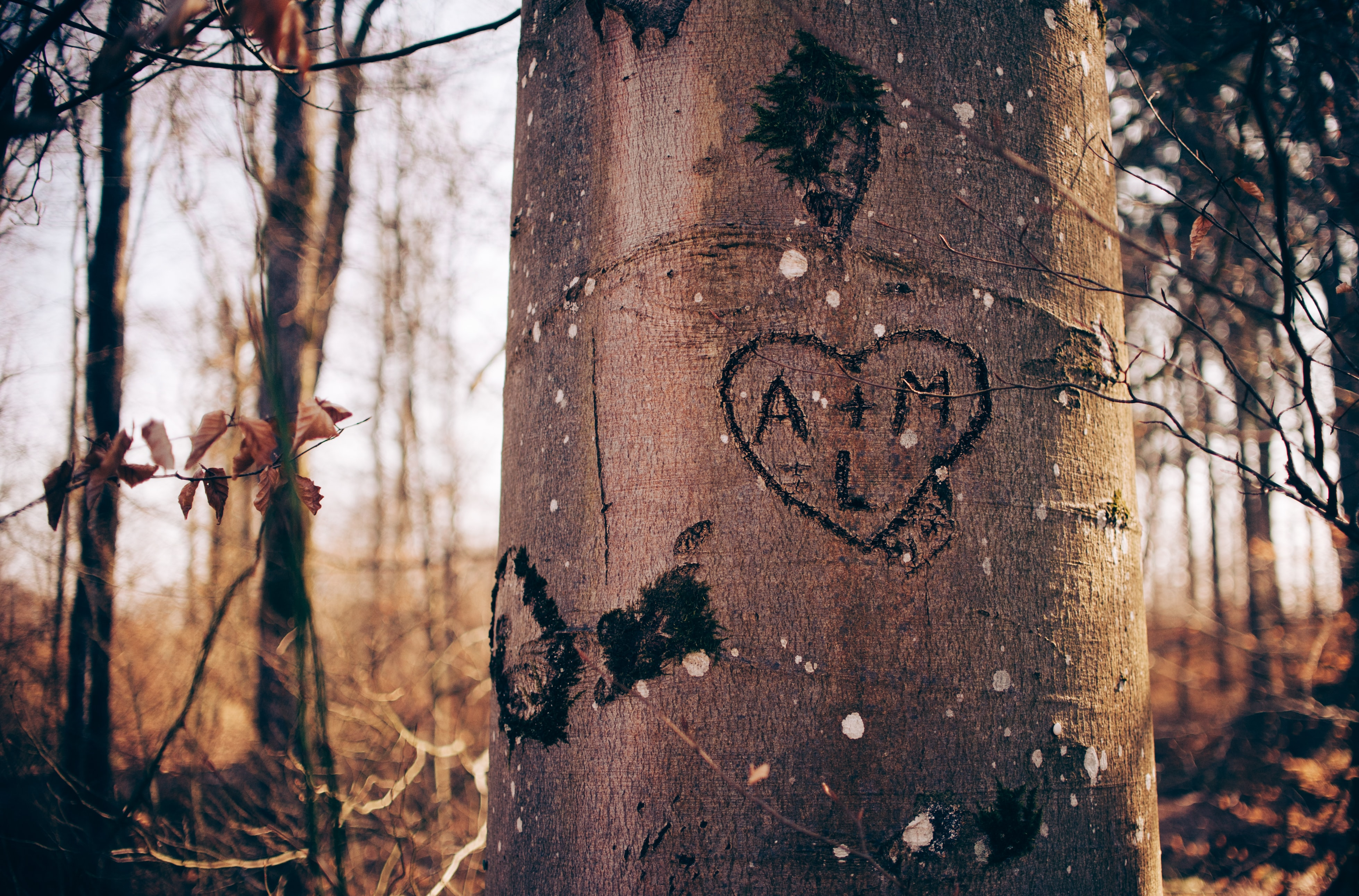 Heart and intitials carved into a tree truck